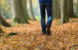 Autumn Walk Photos libres de droits