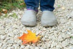 Autumn Walk Lizenzfreies Stockfoto