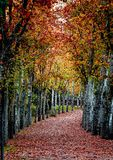 Autumn walk. An autumn walk through the royal gardens of La Casita Prince, at El Escorial, near Madrid (Spain Stock Image