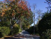 Autumn Walk Fotografia Stock