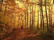 Autumn walk. Person walking in autumn forest Stock Photos