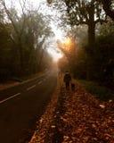 Autumn Walk Imagen de archivo