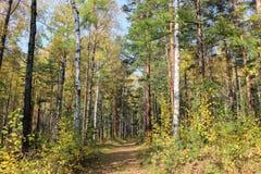 Autumn Walk Imagen de archivo libre de regalías