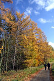 Autumn walk. A walk in the autumnal forest royalty free stock photography