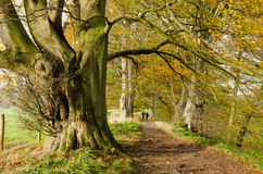 Autumn walk at Allen Banks. Woodland walk at Allen Banks in Northumberland past ancient trees stock photography