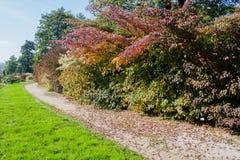 An autumn walk through a botanical garden. Among colourful trees Stock Images