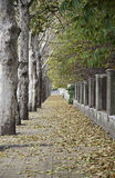Autumn Walk in the city Royalty Free Stock Photography
