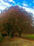 Autumn Walk Through Colorful Trees. Autumn Walk Through Colorful Tree Leaves on Clear Cold Day Stock Photography