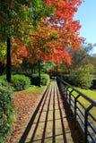 Autumn Walk con le ombre distinte ed il fogliame di caduta brillante fotografia stock libera da diritti