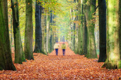 Autumn walk. A couple takes an autumn walk on a beautiful lane in autumn in the forest in the Netherlands with vibrant colored leaves Stock Photography