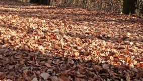 Autumn walk stock video footage