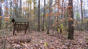 Autumn walk in forest. Autumn walk in the forest Stock Image