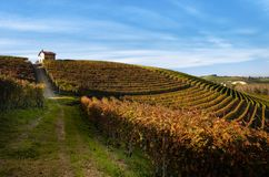Autumn walk after harvest in the hiking paths between the rows and vineyards of nebbiolo grape, in the Barolo Langhe hills, italy stock images