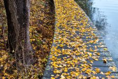 Autumn walk on the lakeshore. With dry leaves Stock Images