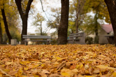 Autumn. Walk. Park. Lonely bench in the autumn park Stock Photos