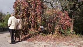 Autumn Walk In The Park stock video