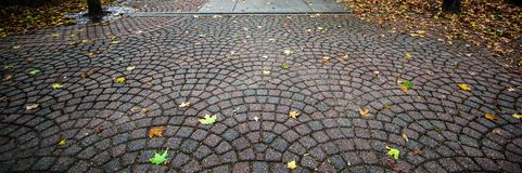 Autumn Walk In The Park Panorama. Autumn leaves on a textured pattern walkway in panoramic orientation with copy space Stock Image
