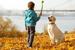 Autumn walk with pet Stock Images