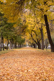 Autumn. Walk in the autumn. Road. Autumn leaves Royalty Free Stock Image