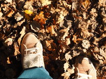 Autumn walk Stock Images