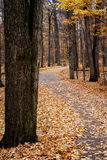 Autumn walk way Stock Images