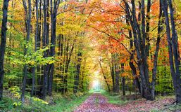 Autumn Walk Way. Colorful trees in a row along scenic walk way during autumn time Stock Photos