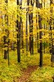 Autumn Walk Way Stock Images