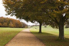 Autumn walk way, England. Walk way through and an English estate, two oak tree by the path, green lawn and woods in the background Royalty Free Stock Photo