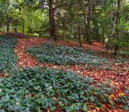 Autumn walk in the woods. Autumn walk in a forest with red leaves on the ground Stock Photo
