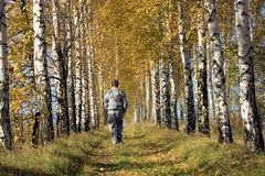 Autumn walk. Among the yellowed birches Stock Images