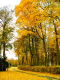Autumn Walking Path Stock Image