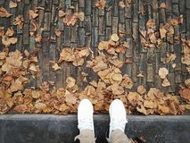 Autumn. Walking on the road in autumn season Stock Image