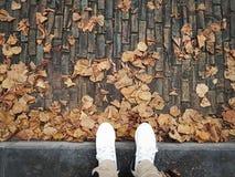 Autumn. Walking on the road in autumn season stock image