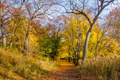 Autumn walkway of High Park covered with orange leaves - Toronto, Ontario, Canada Royalty Free Stock Photography