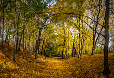 Autumn walkway of High Park covered with orange leaves - Toronto, Ontario, Canada Royalty Free Stock Images