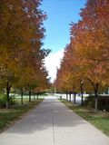 Autumn walkway Royalty Free Stock Images