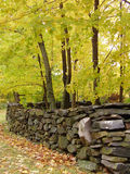 Autumn Wall. Fall foliage in Connecticut Stock Image