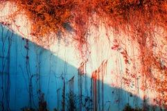 Autumn wall Royalty Free Stock Photo