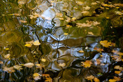 Autumn wall-paper. The fallen-down maple leaves float on water Royalty Free Stock Images