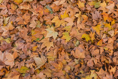 Autumn wallpaper Royalty Free Stock Images