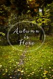 Autumn wallpaper with text.Trees and path. The beginning of the fall, rainy weather. Dry yellow leaves. Text. Wallpaper royalty free stock photo