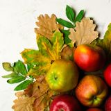 Autumn warm background of fallen yellow leaves and ripe red apples. Frame for text or photo. Applicable for an article Royalty Free Stock Photography