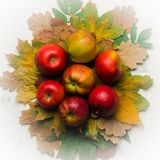 Autumn warm background of fallen yellow leaves and ripe red apples. Frame for text or photo. Applicable for an article Royalty Free Stock Photos