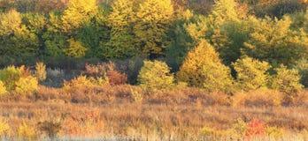 Autumn warm colors Stock Photos