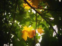 autumn was coming Royalty Free Stock Image