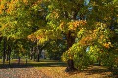 Autumn Washington Crossing Arkivfoton