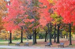 Autumn in Washington DC Park Stock Image