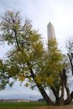 Autumn Washington Monument Imagenes de archivo