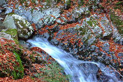 Autumn watefall Stock Photos
