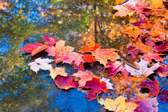 Autumn in water Stock Photos